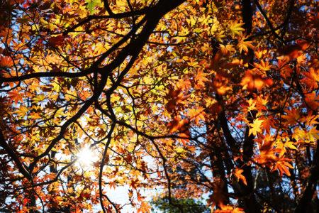 秋の霧島で地図読み&ロングトレイル