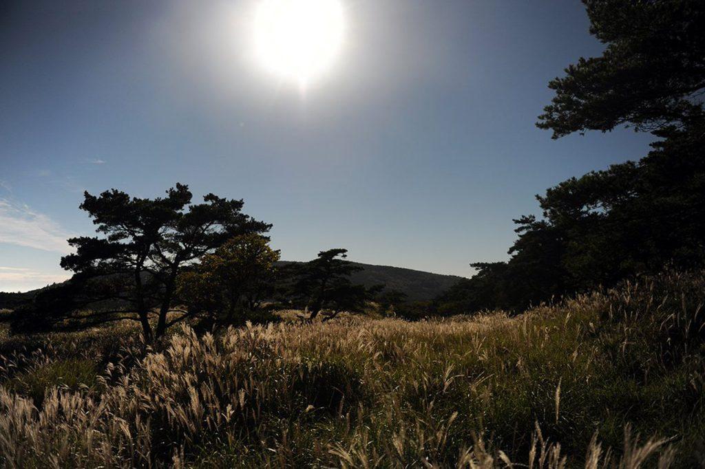 白鳥山登山 霧島えびの高原~池めぐり